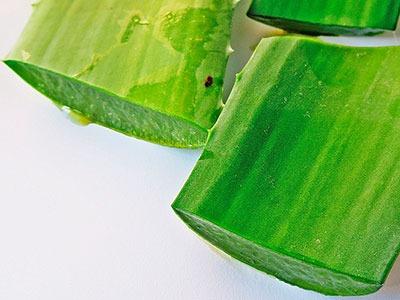 Extracto de Aloe Vera o jugo de Aloe Vera: Aloe Barbadensis Extract