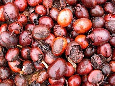 Manteca de Karité: Butyrospermum parkii butter