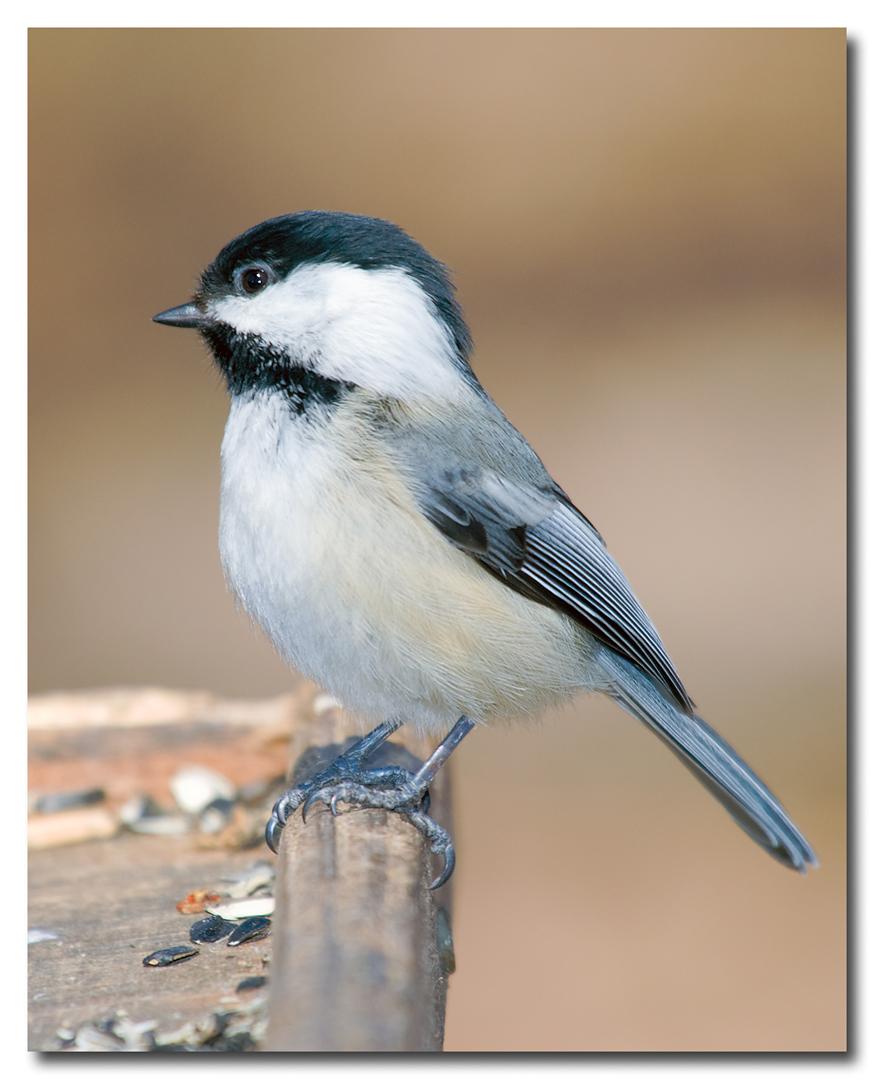 Fall Bird Feeder Wallpaper Birds Amp Winter A Perfect Combination Nebraska Project Wild