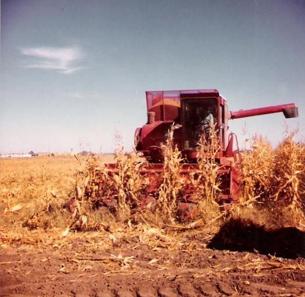 harvest-001