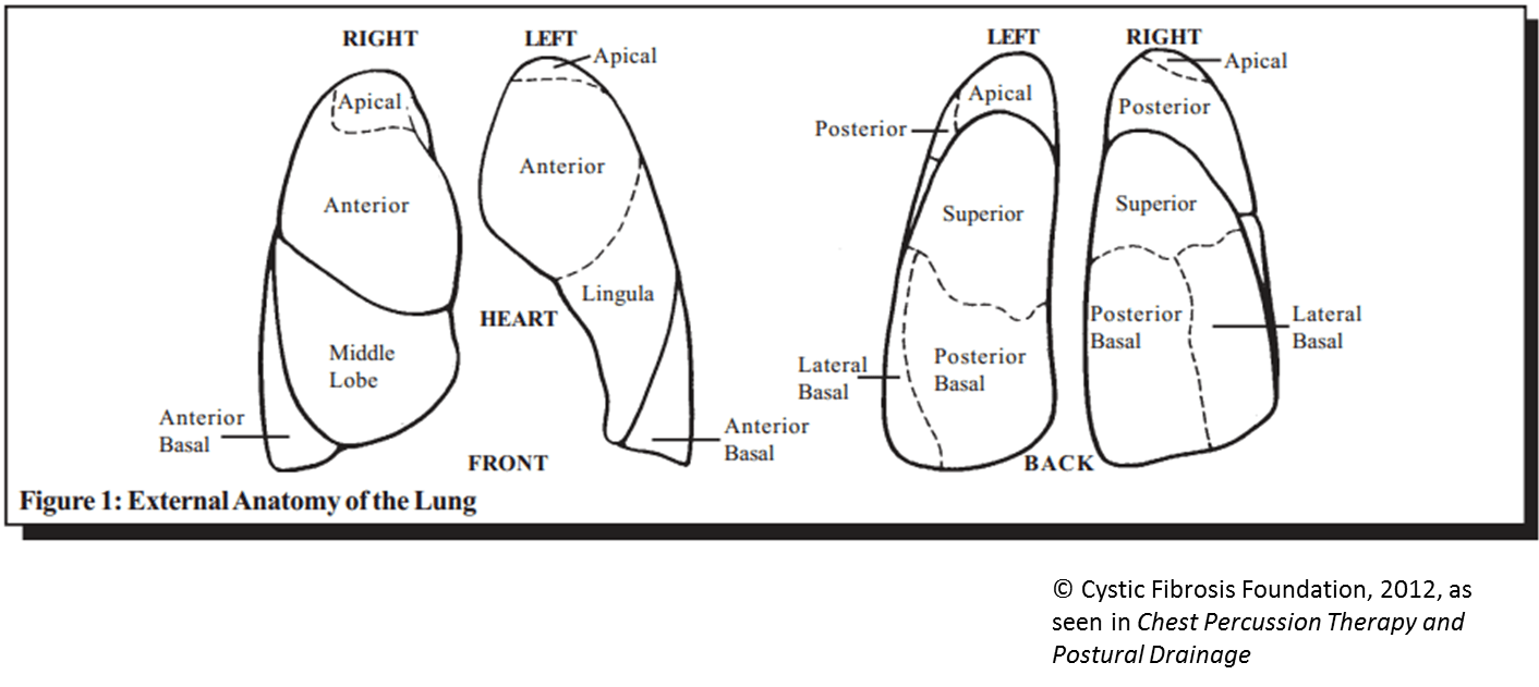 Mucus, OUT!: Common Airway Clearance Techniques (ACTs