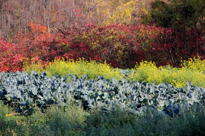garden at Hampshire