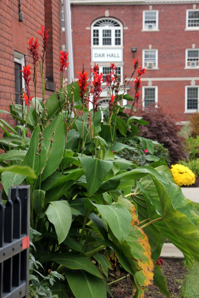 canna and buildings at AIC