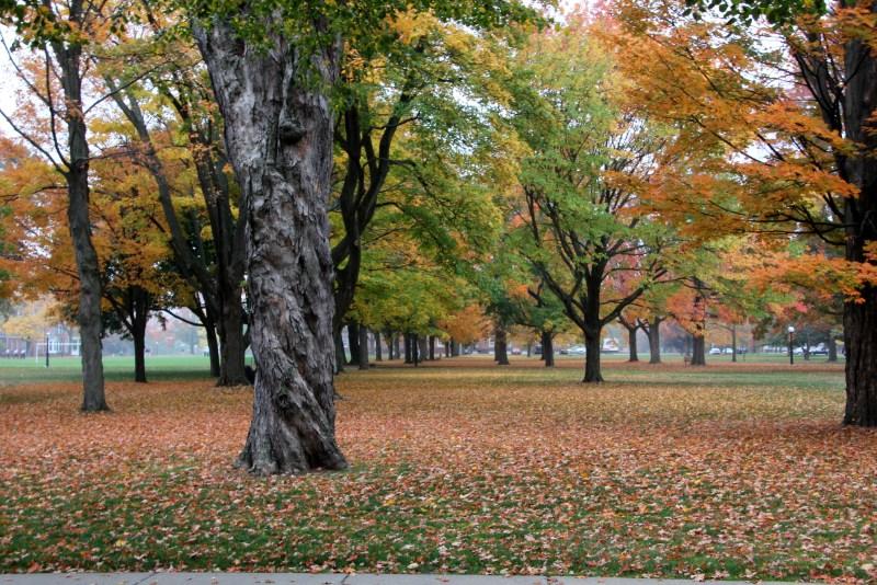 Autumn trees on quad