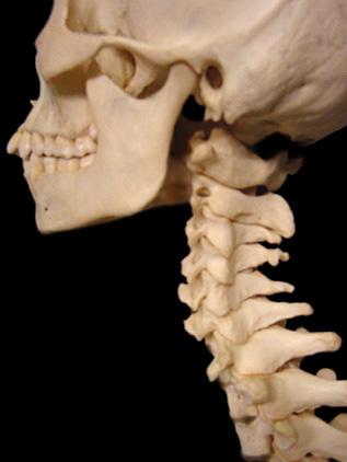 Understanding Where Your Neck Pain Is Coming From Neck