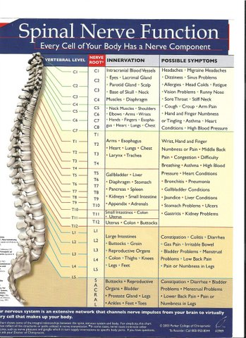 Examining The Spinal Nerve Chart Neck Pain Support Blog