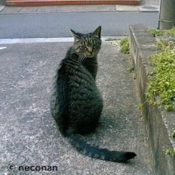 大人猫 5