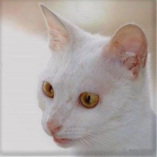 猫の白血病について1