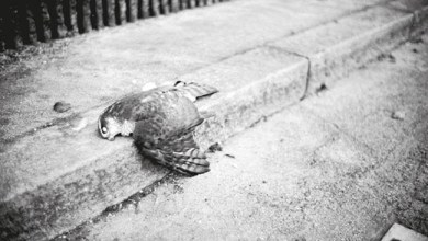 Photo of [CRÍTICAS] RUSTY PACEMAKER (DEU) «Ruins» DIGIPACK 2015 (Solanum Records)