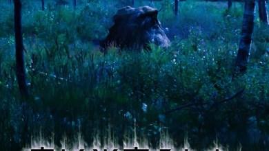 Photo of SKYFALL (SWE) «Sleeping Forest»