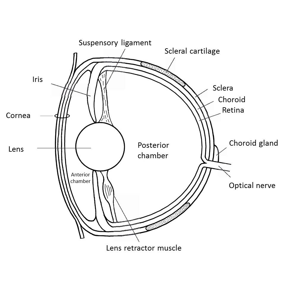 hight resolution of fig 7 eye