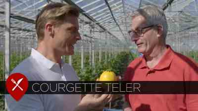 courgette teler