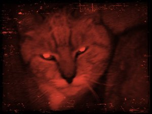 my_cat_looking_scary_by_xxpurpledonutz54xx-d63uug1