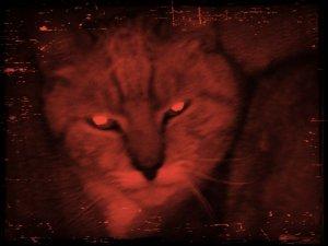 my_cat_looking_scary_by_xxpurpledonutz54xx-d63uug1