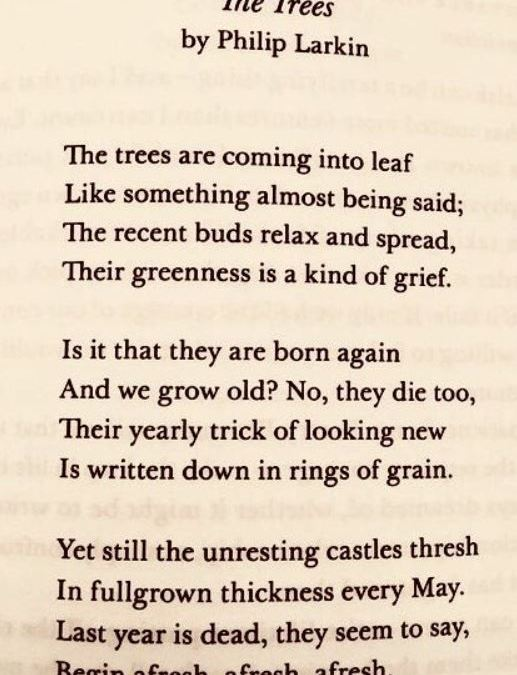 Poem: The Trees, Philip Larkin