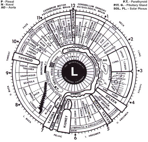 diagram of the left eye cctv balun wiring cat5 and schematics what is iridology needbalance also called iris analysis or diagnosis study colored part readings are made by iridologists to