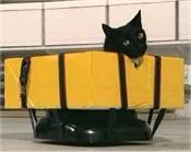 Elvis the Cat