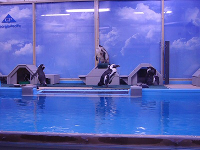 Penguins, Hanging Out