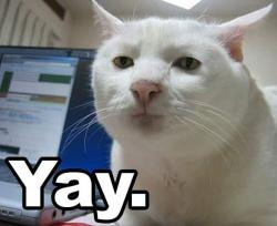 Cat: Yay
