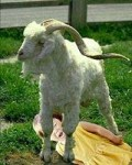 The Childhood Goat Trauma Foundation: Goats Are Targeting Our Youth
