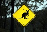 Your New Pet Wallaby