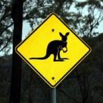 Rock Wallaby Sign