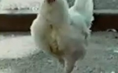 Nike angry chicken