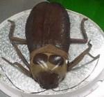 Nummy: Cockroach Cake