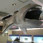 Megamouth shark!