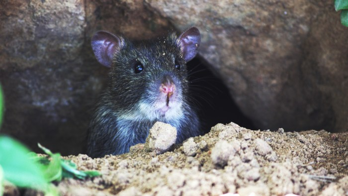 mouse near rocks Getting To The Bottom Of Bumps In Your Basement