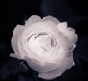 The Pale Flower