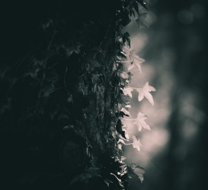 The Light on the Leaf
