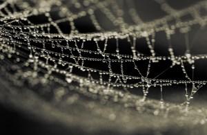 Diamonds Trapped In A Web