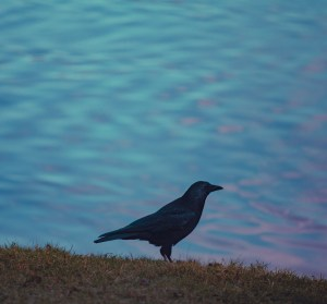 The Crow by the Lake