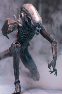 mm5_alienpredator_photo_03_dp