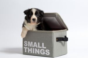 Moving with pets to Ontario can be quite simple once you know what you need.