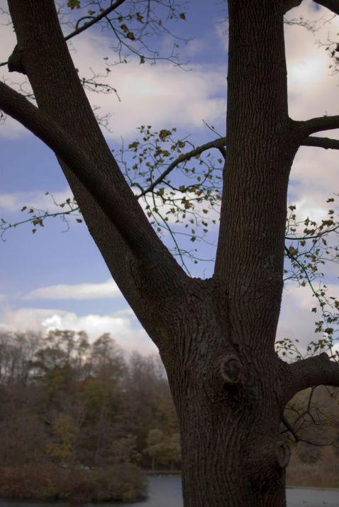 06_treebrances