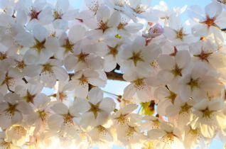 12_bunch_of_blossoms