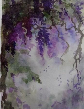 Wisteria violets