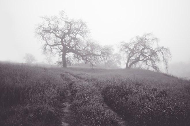 Foggy Path | Neely Wang