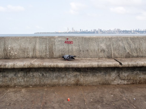 4000: A Black pigeon with red legs on the pavement ,a small red plastic wrapper on the floor and beautiful Mumbai city in the backdrop.There are half a dozen legal kabutarkhanas in Mumbai, but almost every area has four to five illegal ones