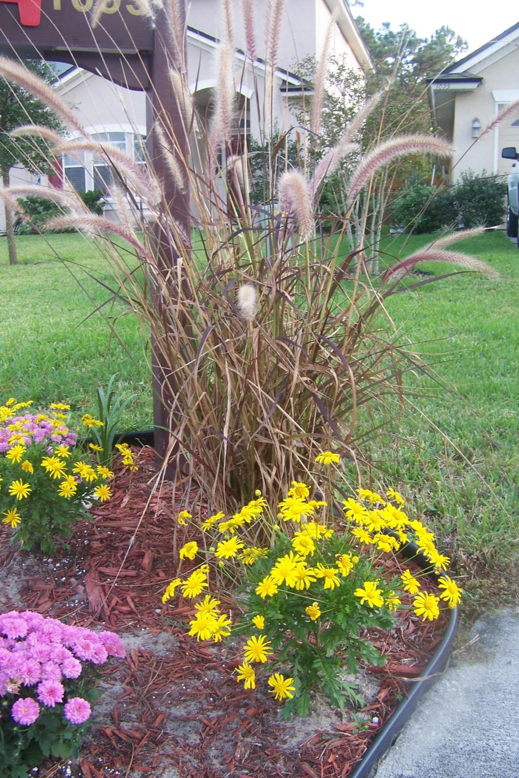 mailbox garden fall 2008 northeast