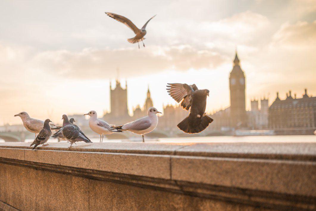 flying birds in london