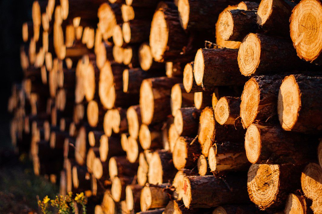 wood logs forest free