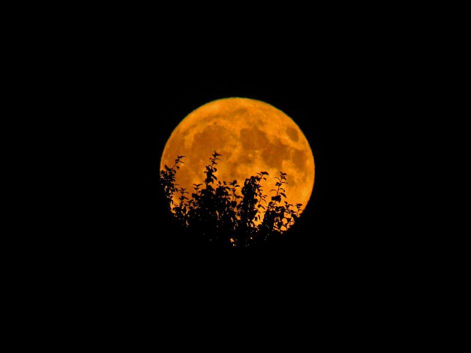 orange full moon free