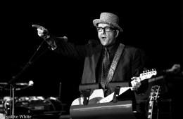 Elvis Costello (Nicola Tröhler)