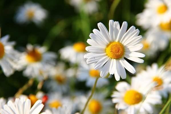 Negocios Rentables en Chile floricultura