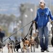 Abrir un negocio de pet-sitter: cuidador de mascotas