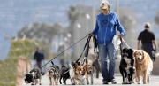 Iniciar un negocio como pet-sitter: Ganar dinero cuidando mascotas