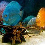 Cómo montar un tienda de peces, negocio de colores